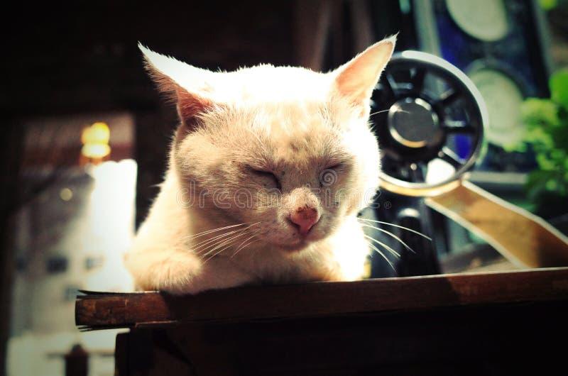 一只可爱的睡觉猫 在中国农夫的家 免版税库存图片
