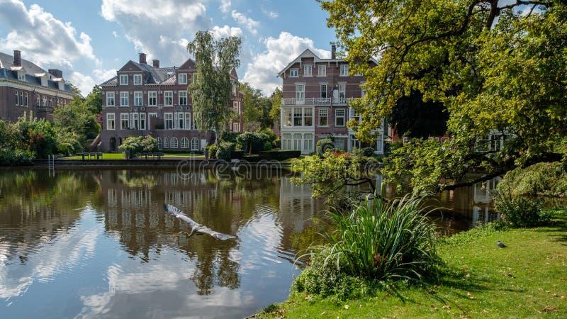 一只在一个池塘蓝色苍鹭作为在城市公园Vondelpark在阿姆斯特丹中心,荷兰 免版税库存照片
