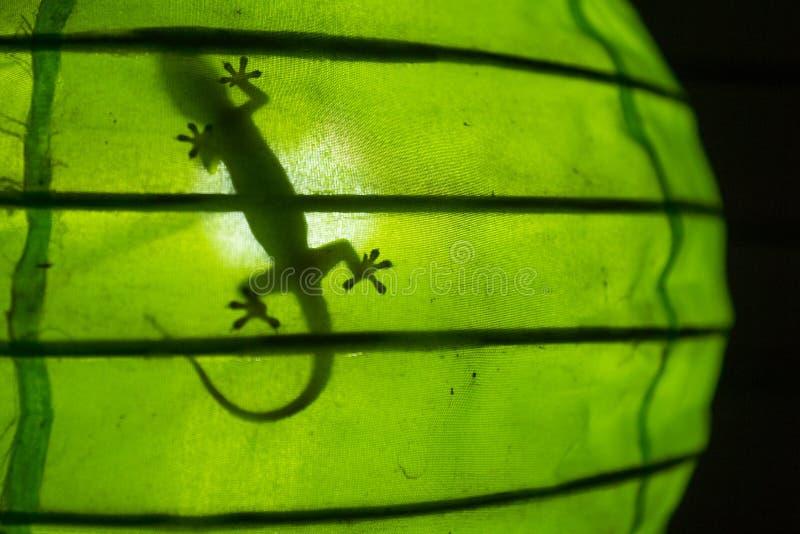 一只壁虎的阴影在一盏绿色灯的, Gili空气,龙目岛,印度尼西亚 库存照片
