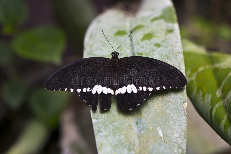 图片 包括有 野生生物, 森林, 敌意, 蝴蝶, 若虫, 行程, 结构树图片