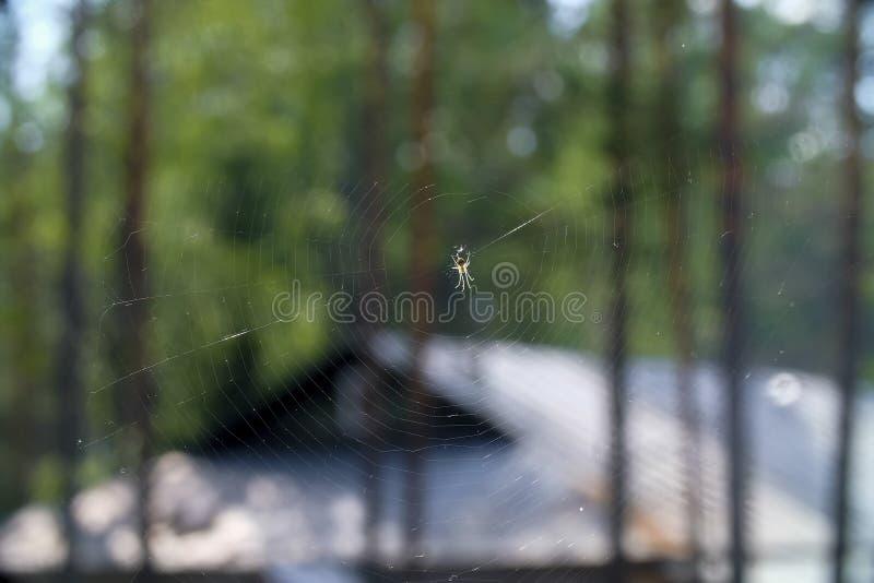 一只大蜘蛛在中心 免版税库存照片