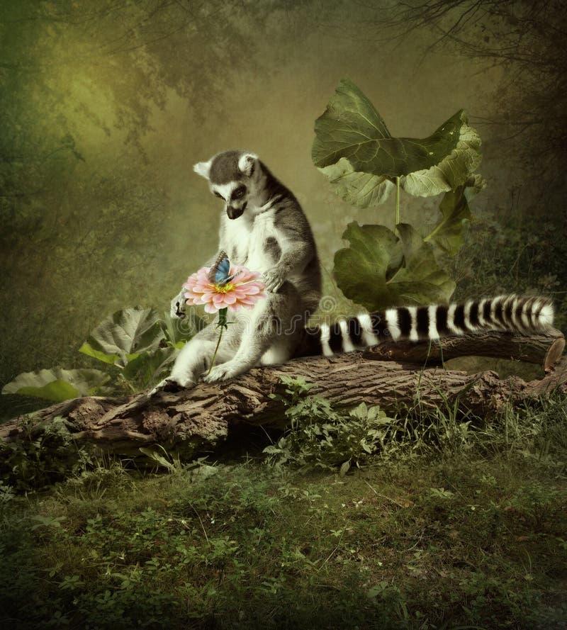 一只好奇狐猴 库存图片