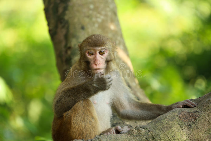 一只孤独的猴子 库存图片