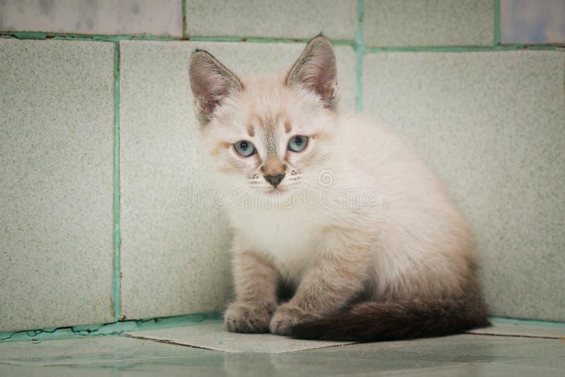一只孤立漫步的小猫坐一个瓦片在狩医医院 免版税库存照片