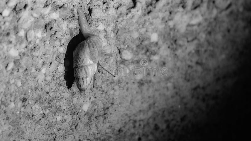 一只孤立蜗牛在晚上 免版税库存图片