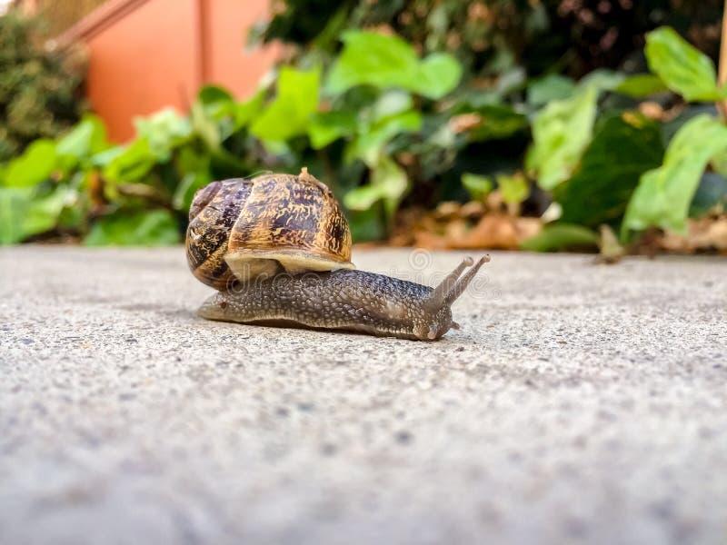 一只孤立蜗牛 图库摄影