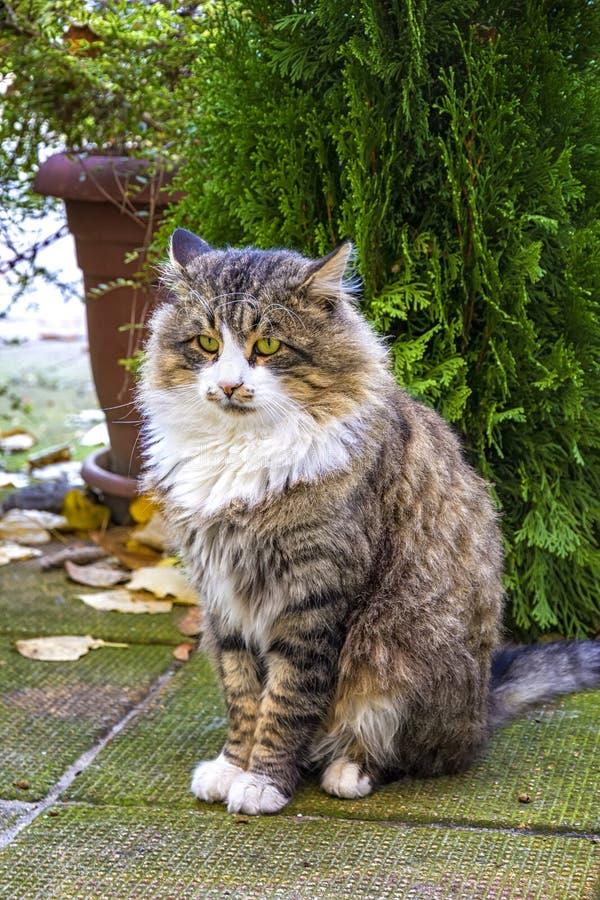 一只尊严的猫的照片与深刻的神色的 免版税图库摄影