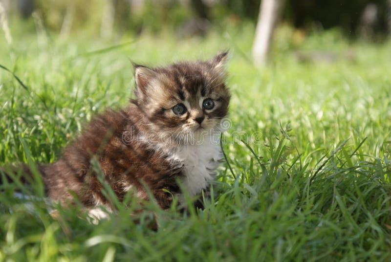 一只小小猫在草坐 免版税库存照片