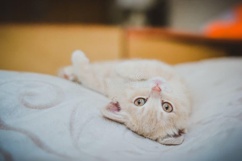 一只小小猫说谎睡觉 库存照片