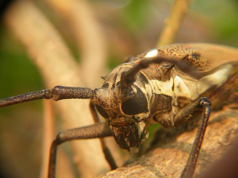 一只小昆虫的宏指令 库存照片