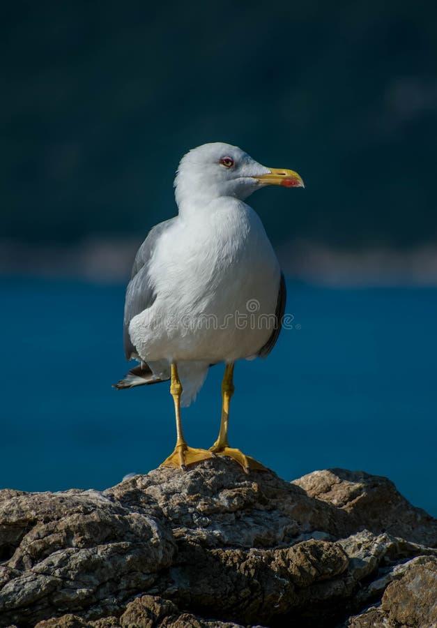 一只小海鸥基于海†‹â€ ‹土坎 图库摄影
