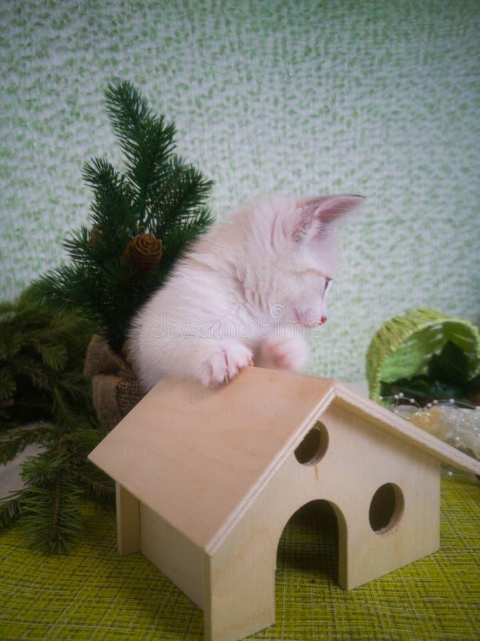 一只小猫坐一个大房子和神色在老鼠 图库摄影