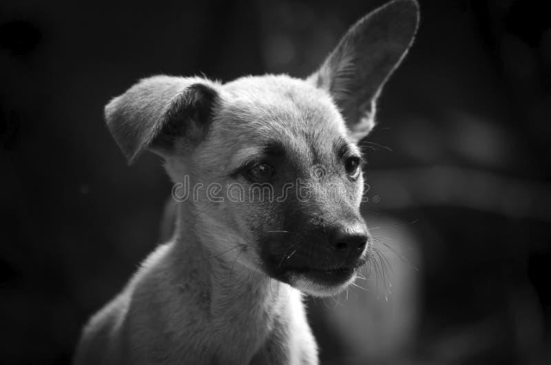 一只小的小狗的画象 对比黑白照片 免版税库存图片