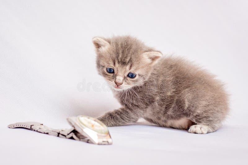 一只小的灰色猫看时钟 控制是必要的 免版税库存照片