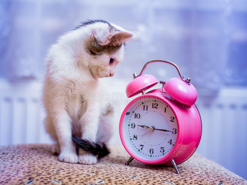 一只小的白色小猫看时钟 它` s时间有brea 免版税图库摄影