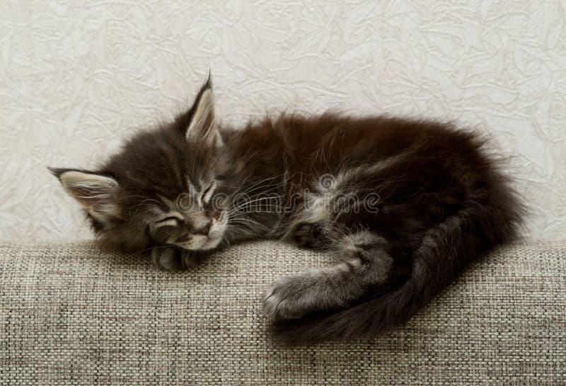 一只小的蓬松小猫甜甜地睡觉 免版税图库摄影