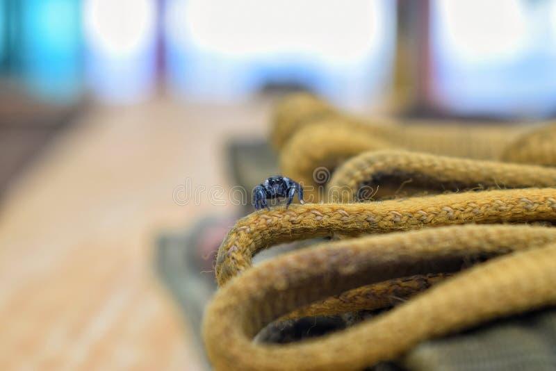 一只小的蜘蛛 免版税库存照片