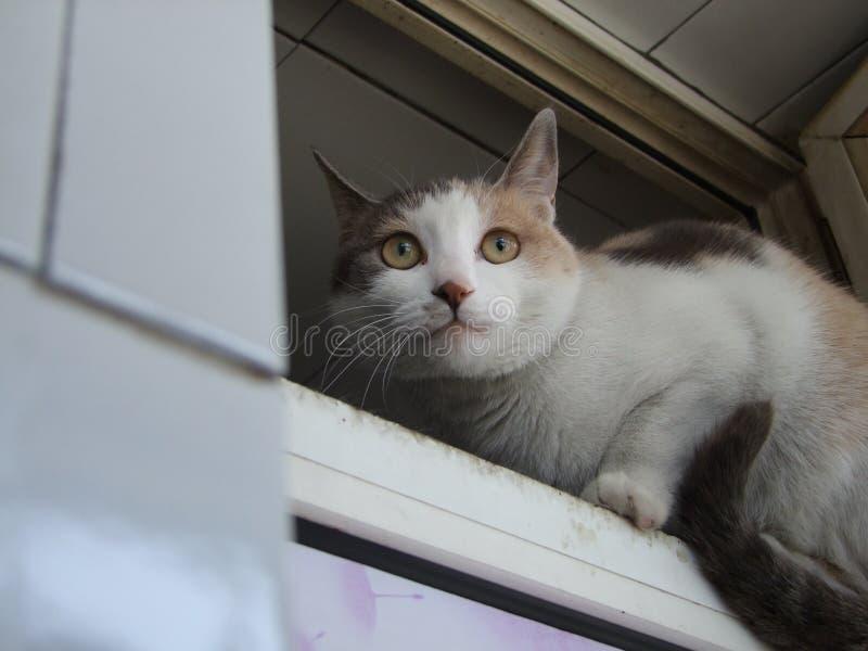 一只小的黄色黑白色猫 免版税库存照片