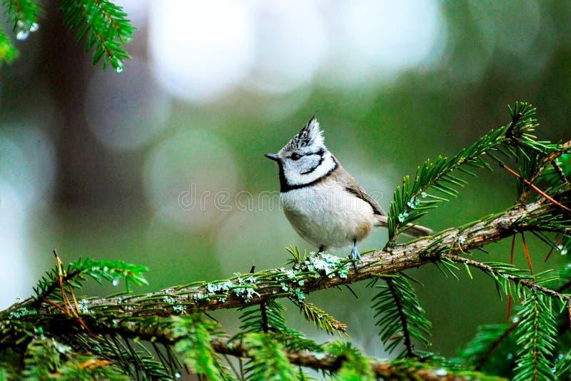 一只小鸟在树枝栖息 免版税库存照片