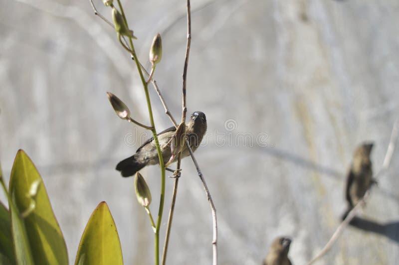 一只小鸟 免版税库存照片
