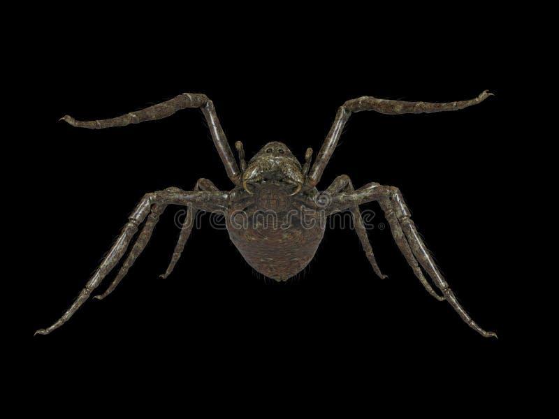一只巨型蜘蛛 向量例证