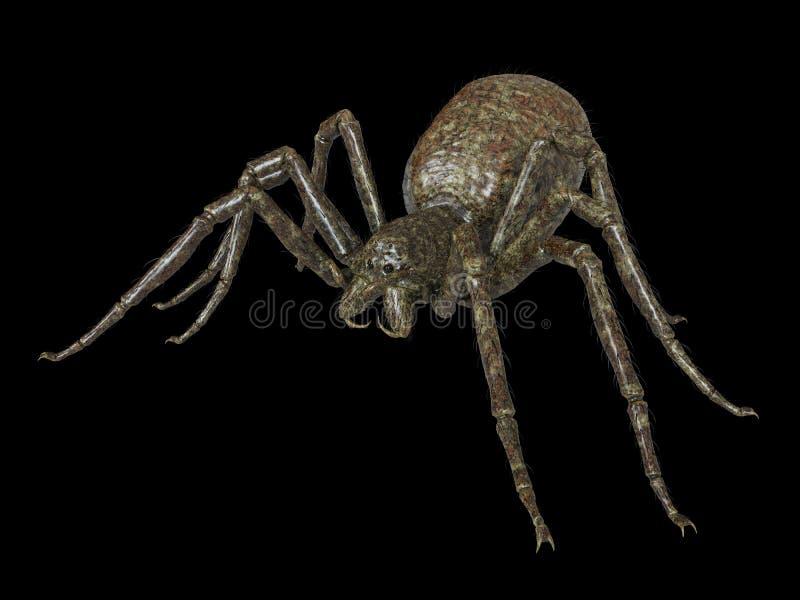 一只巨型蜘蛛 皇族释放例证