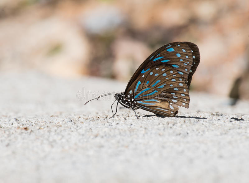 一只布朗蝴蝶 库存照片
