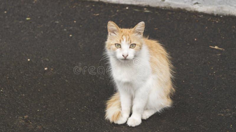 一只惯座猫的照片画象 街道宠物 离群动物 免版税库存图片