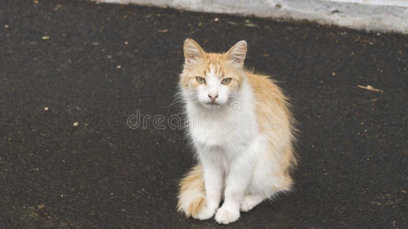 一只惯座猫的照片画象 街道宠物 离群动物 库存图片