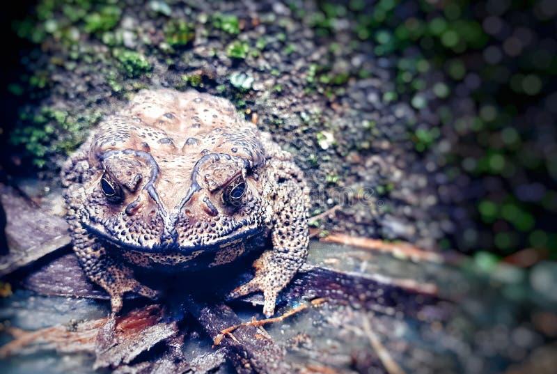 一只懒惰青蛙坐玻璃和木头 免版税库存照片