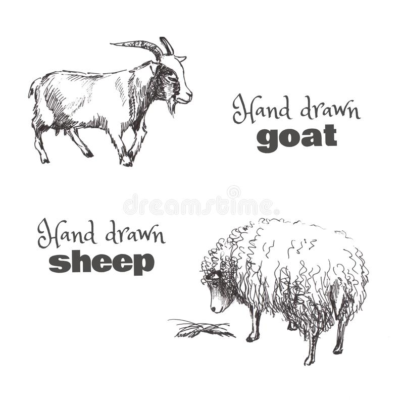 一只手拉的速写的山羊和绵羊 黑白套家畜 免版税库存图片