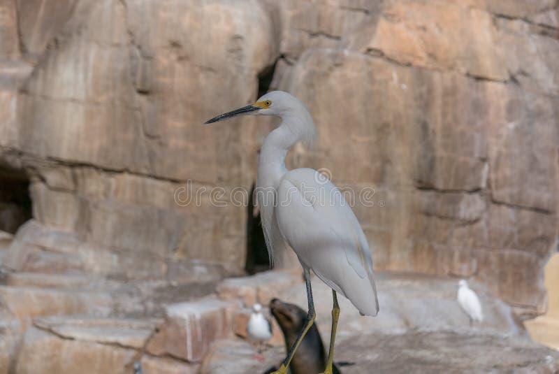 一只摆在的海鸟在圣地亚哥 库存照片