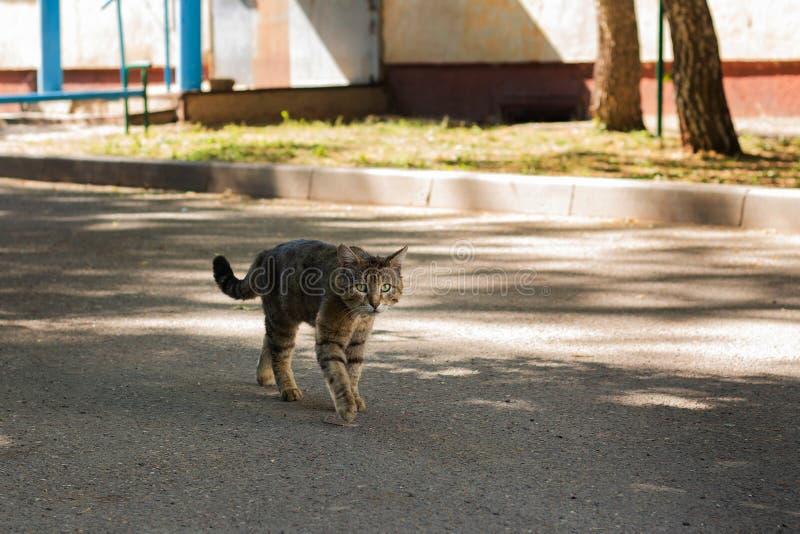 一只无家可归的猫步行沿着向下街道 库存照片