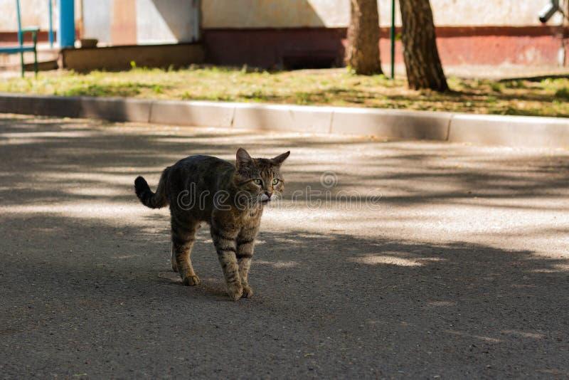 一只无家可归的猫步行沿着向下街道 免版税图库摄影