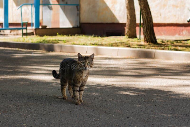 一只无家可归的猫步行沿着向下街道 免版税库存图片
