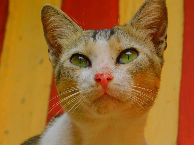 一只棕色和白色猫的一张美丽的照片 库存照片