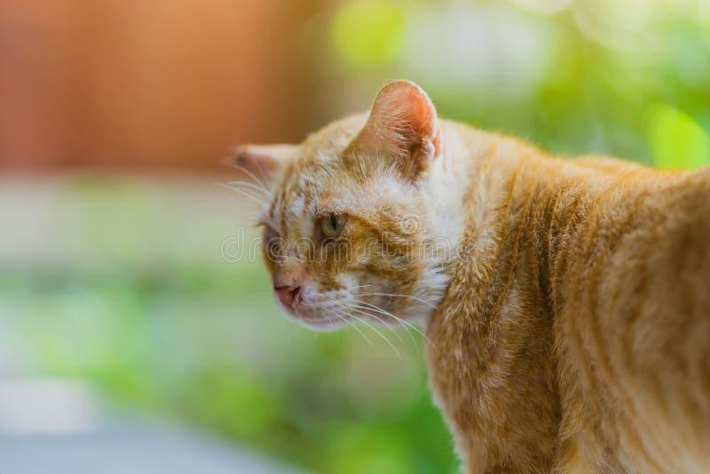 一只棕色猫放松在窗台 库存照片