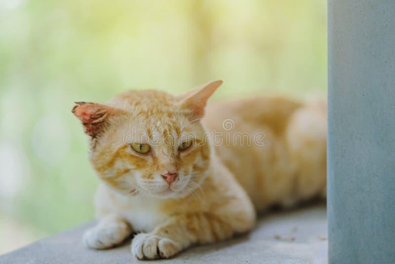 一只棕色猫放松在窗台 免版税图库摄影