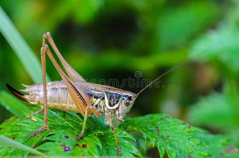 图片 包括有 天线, 关闭, 野生生物, 木头, 公园, 若虫 - 105007533图片