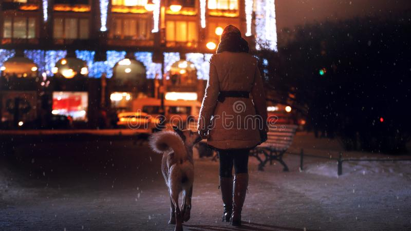 一只流浪狗在城市 在街道上的夜 免版税库存图片