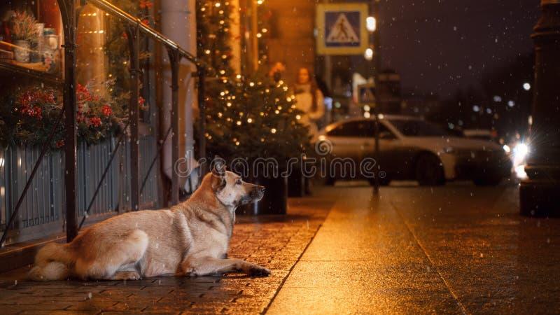 一只流浪狗在城市 在街道上的夜 图库摄影