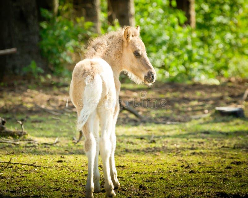 一只淡色的幼小驹在阳光下 免版税库存照片