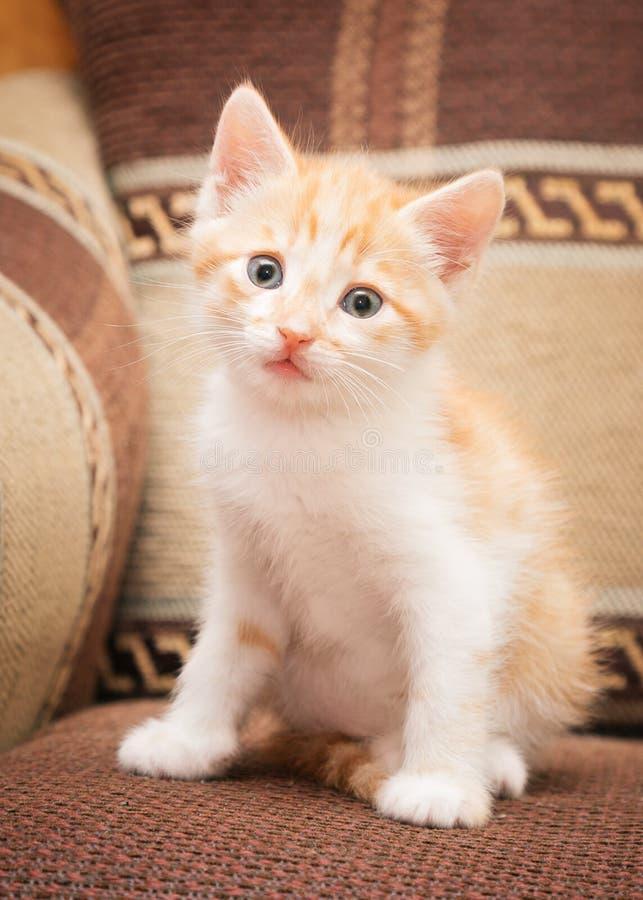 一只滑稽的红头发人小猫坐沙发和逗人喜爱的神色在您 免版税库存照片