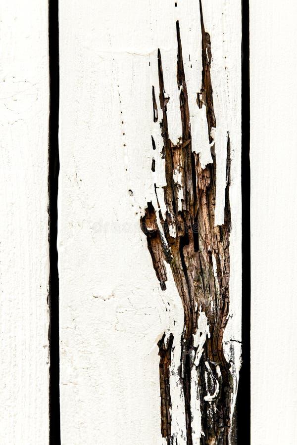 一只爪手的踪影在白色的绘了木头 免版税库存图片