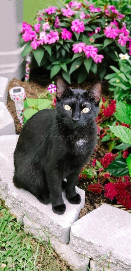 一只猫在他的庭院里! 免版税库存图片