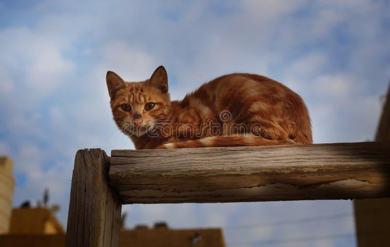 一只猫在凝思方式下 免版税库存照片