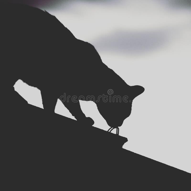 一只猫的剪影在屋顶的 免版税图库摄影