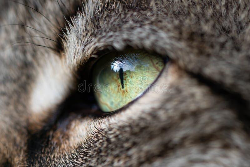 一只猫的眼睛在特写镜头的 免版税图库摄影