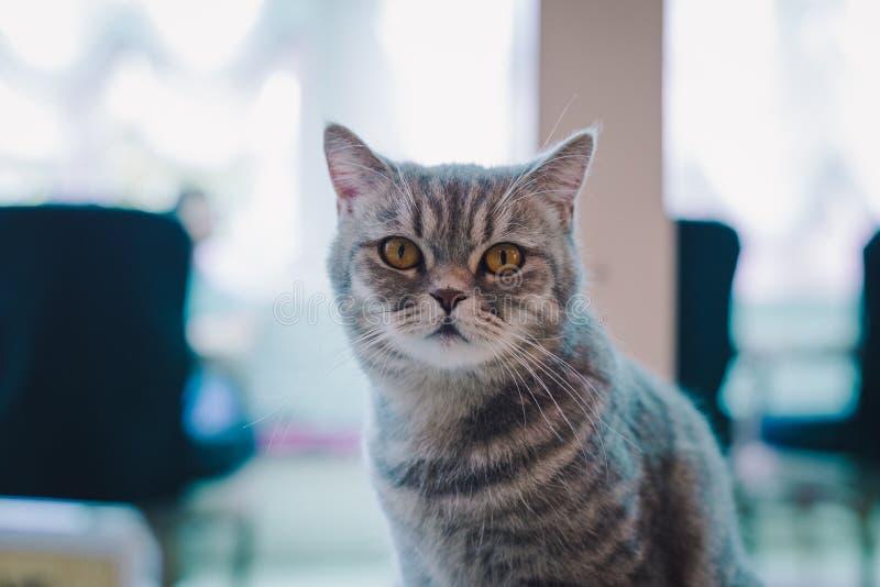 一只猫的肖象在咖啡馆的与柔光和软的焦点 放松并且安慰 免版税库存图片