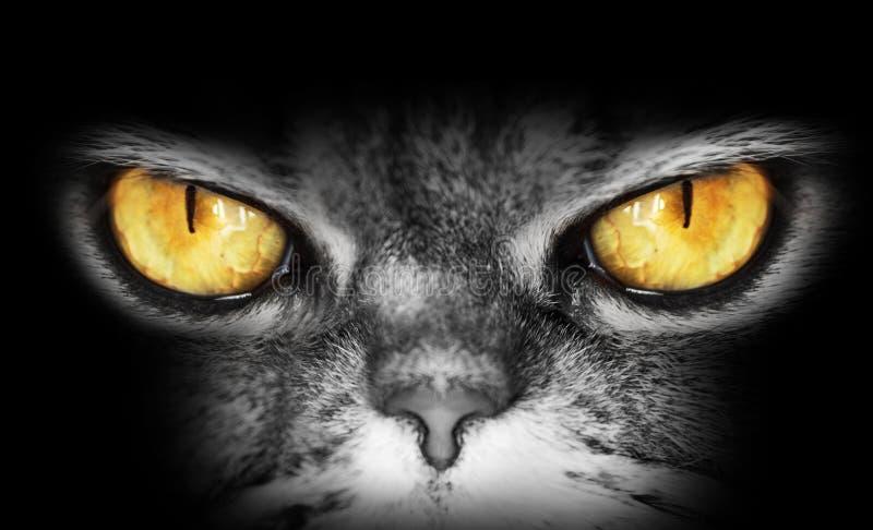一只猫的黑暗的画象与黄色眼睛,神色到照相机里,危险邪恶的神色,猫头鹰的 库存照片